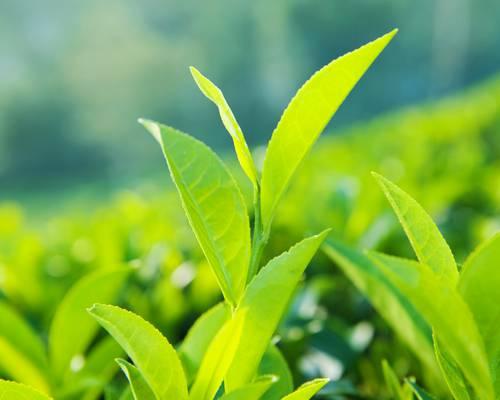 LE COMMERCE ÉQUITABLE : Levier pour favoriser les installations en agriculture bio ?