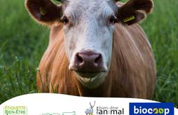 Quelle place pour le bien-être animal dans la bio ?