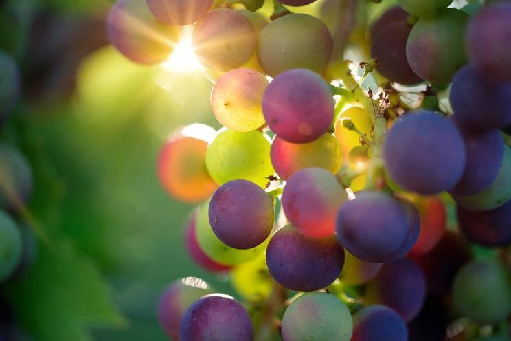 Cluster Bio - Filières vins bio