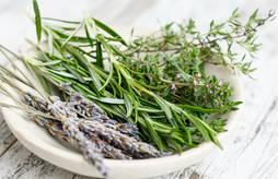 Speed-meeting :Plantes à Parfum, Aromatiques et Médicinales bio