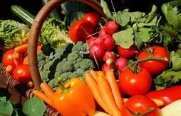 Atelier autour de la filière légumes bio : restitutions de l'enquête, rencontres et échanges